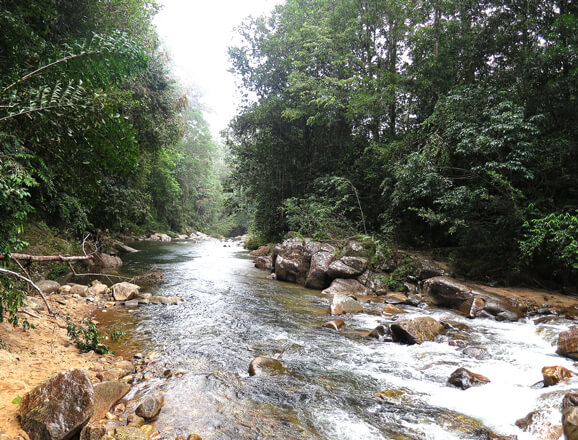 Sinharaja Forest
