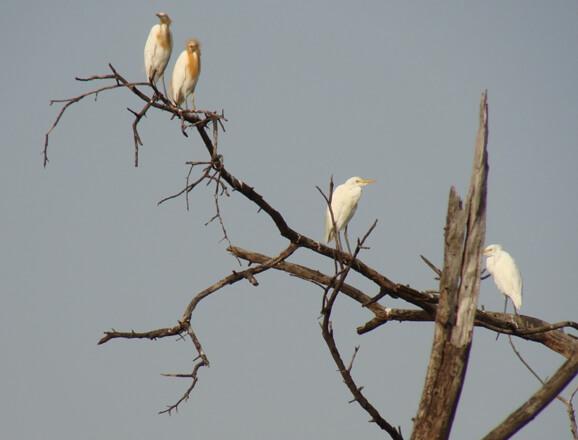 Keoladeo Birdwatching Trails