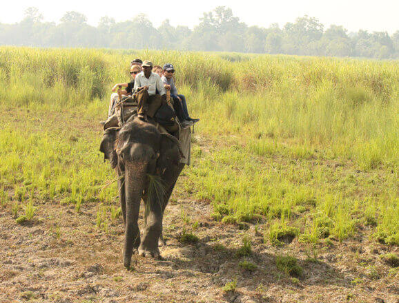 Elephant Safari in Dudhwa