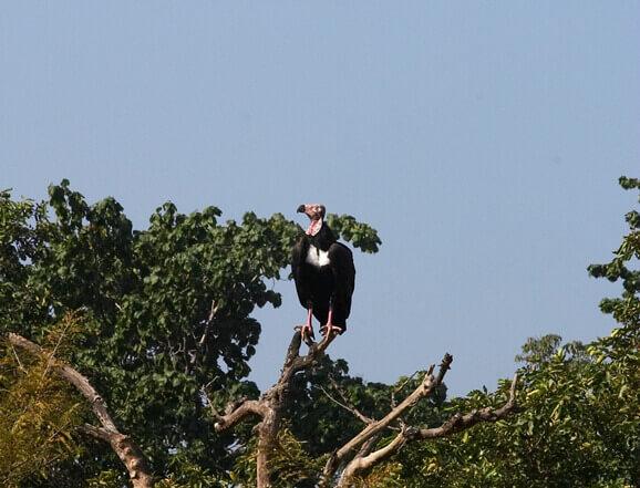 Birding in Bandhavgarh