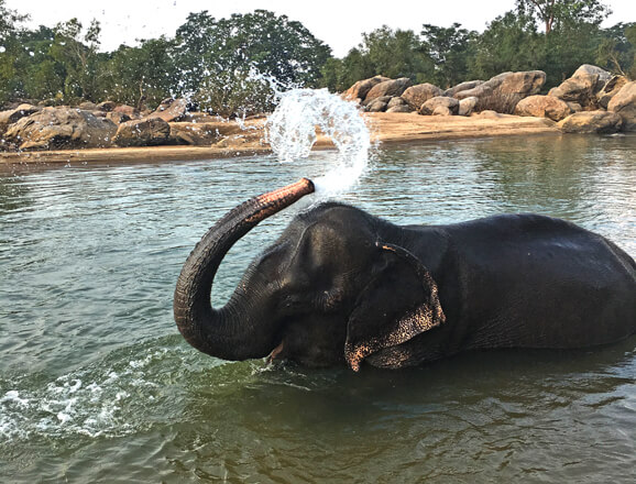Bathe an Elephant