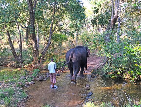 Satpura Elephant Trails