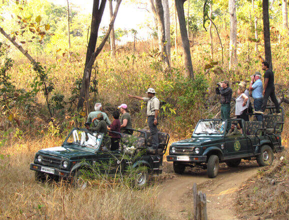 Capture moments at your own pace and navigate without restrictions on full day photography permits through Bandhavgarh, Kanha or Pench national parks