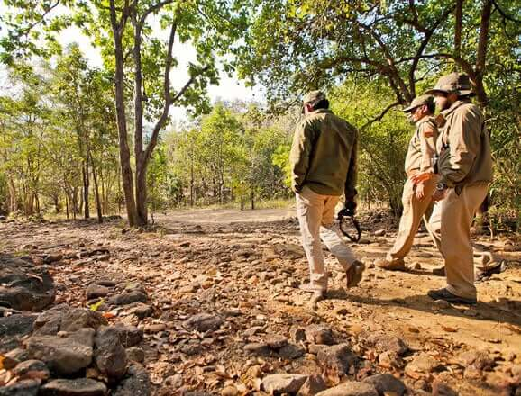 Satpura Walking Safari