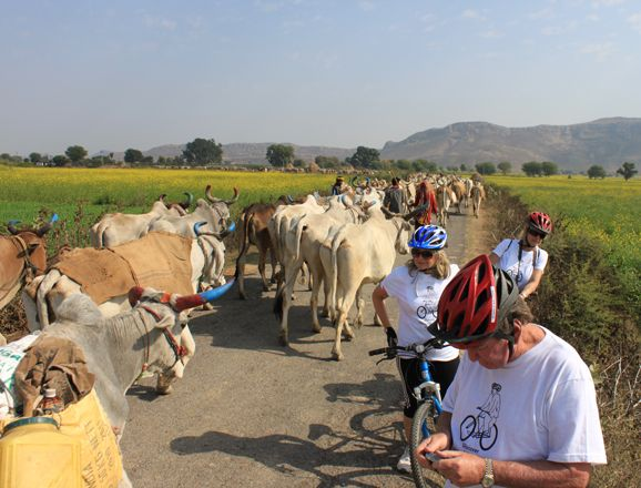 Aravalli Cycling Trails