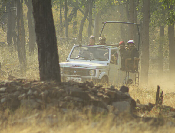 Tadoba Jeep Safari