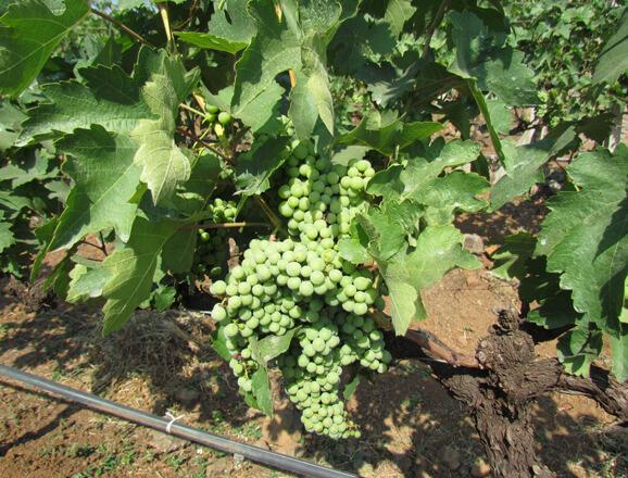 Nashik Wine Trails