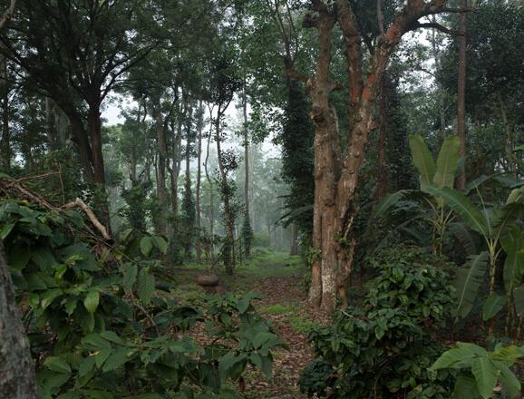 Explore Rajakkad Estate